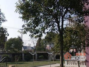 古树园商务楼