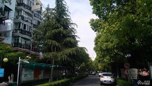 金泽苑小区图片