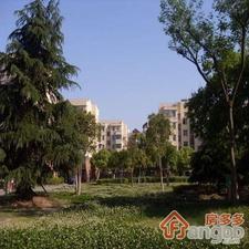 杨家镇小区小区图片