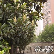 强生花苑小区图片